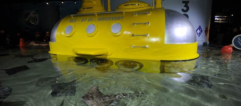 EXPERIENCE UNDER THE RAY-DAR AT SEA LIFE GREAT YARMOUTH NEW FOR 2017